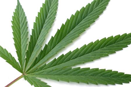 Φέρες:Σύλληψη για ναρκωτικά